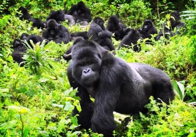 Rwanda-4